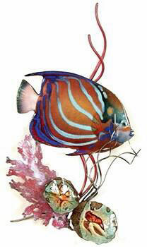 Blue Ring Angelfish in Coral