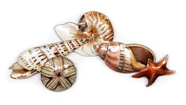Five Seashell Grouping