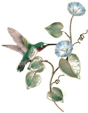 Broad-Tailed Hummingbird on Morning Glory