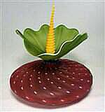 Bobtanical Urchin Ruby